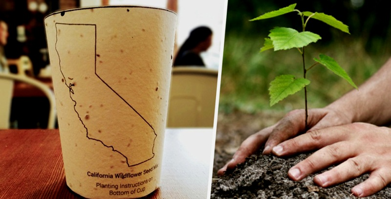 tasse-cafe-biodegradable-arbre